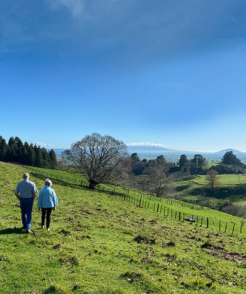 Walk the rolling picturesque hills of the Kamahi Cottage farm