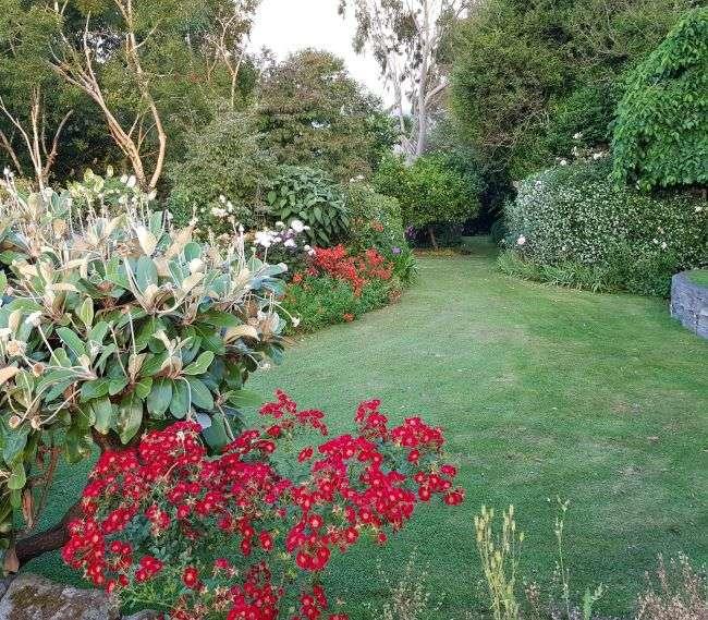 https://kamahi.co.nz/wp-content/uploads/Garden-in-summertime.jpg