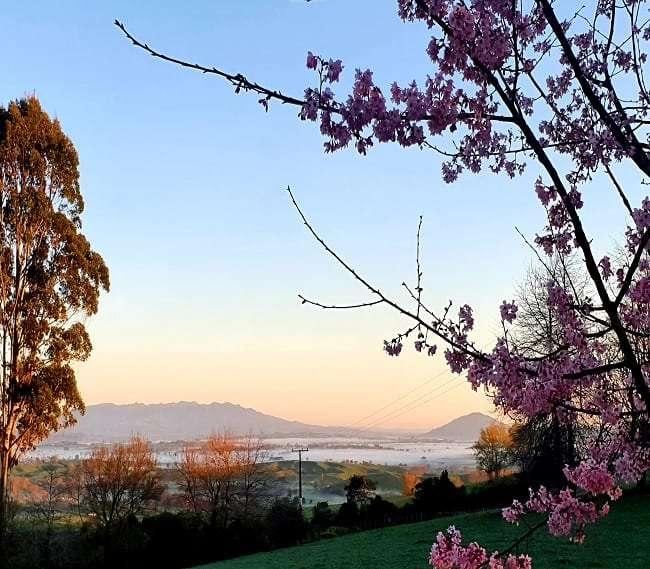https://kamahi.co.nz/wp-content/uploads/Spring-views-Kamahi-Cottage.jpg