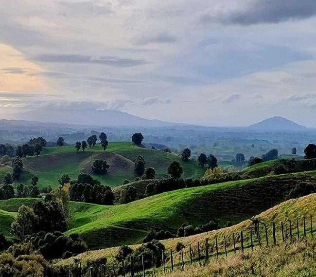 https://kamahi.co.nz/wp-content/uploads/Views-of-Mt.-Pirongia-Mt.-Kakepuku-from-the-farm.jpg
